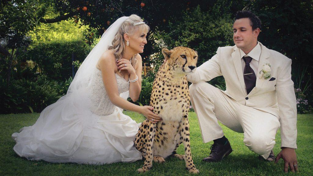 Wedding Photograph of Couple with cheetah